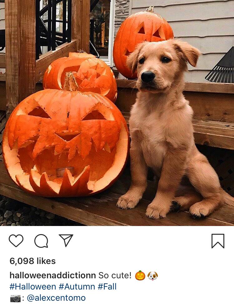 Image on the @halloweenaddictionn Instagram account